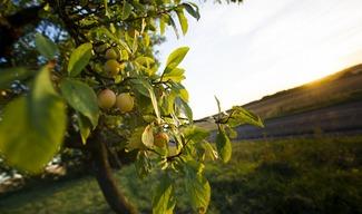 HAUTCOLAS FRUITS - Heudicourt-sous-les-Côtes