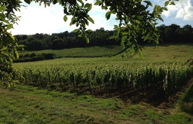 DOMAINE DE MONTGRIGNON 2 - Vigneulles-lès-Hattonchâtel